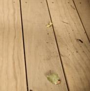 Terraza sucia con hojas
