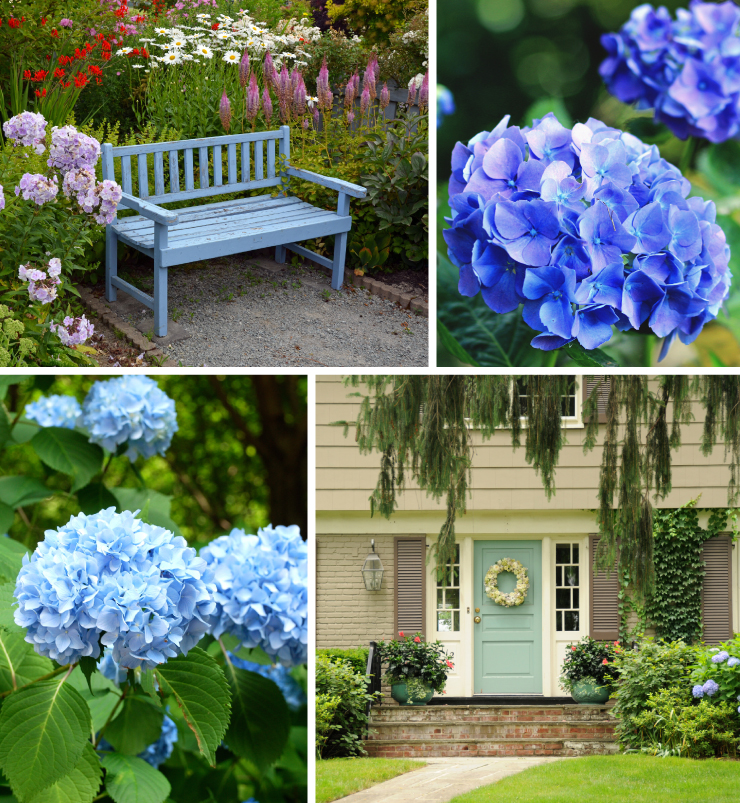 A collage of images representing blue flowers.