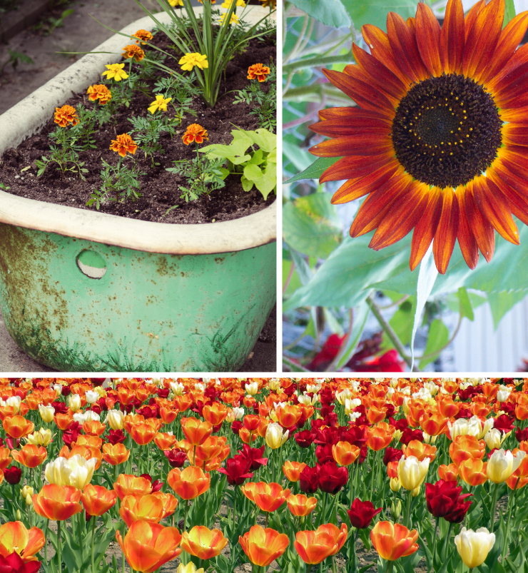 A collage of images representing red and orange flowers.