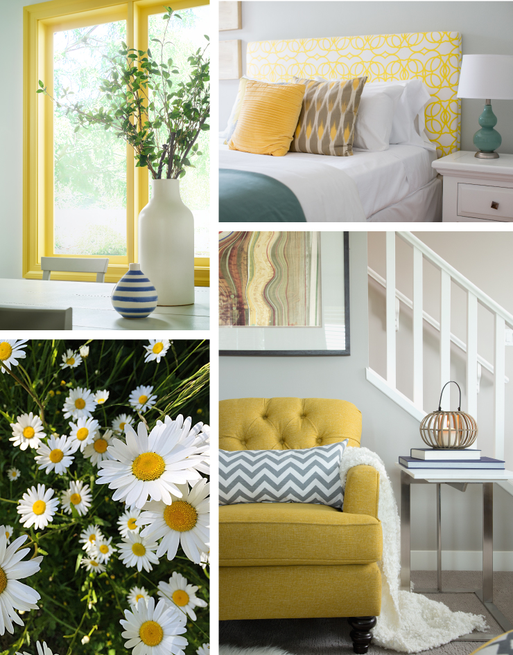 A collage of images representing the color: English Daisy (yellow hue).
