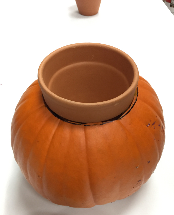 The cut pumpkin with the clay pot sitting inside at the top, popping out at the rim.