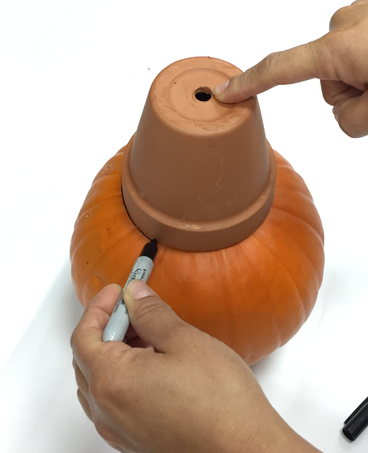 A person tracing the shape of the open end of the clay pot on the pumpkin to use as a guide for the hole to cut.