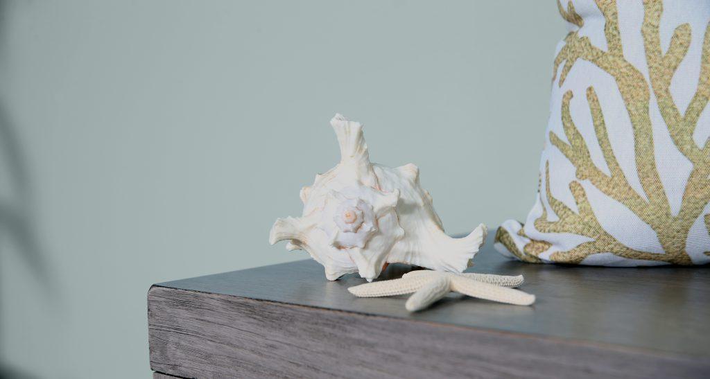 Detail image of a beautiful creamy seashell and starfish.