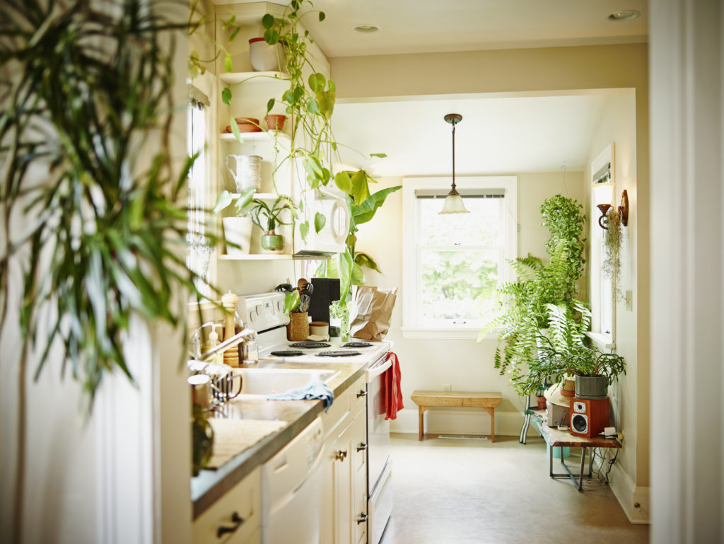 This is a narrow kitchen with plants. Open shelving with plants and a plant being shown in the foreground.