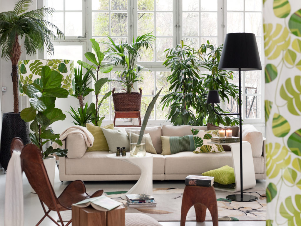 This image shows a range of plants in a living room setting. There is a cream sofa with monochromatic green pillows. A leather chair and wooden stand. The focal point is the beautiful plants being displayed throughout the living room.