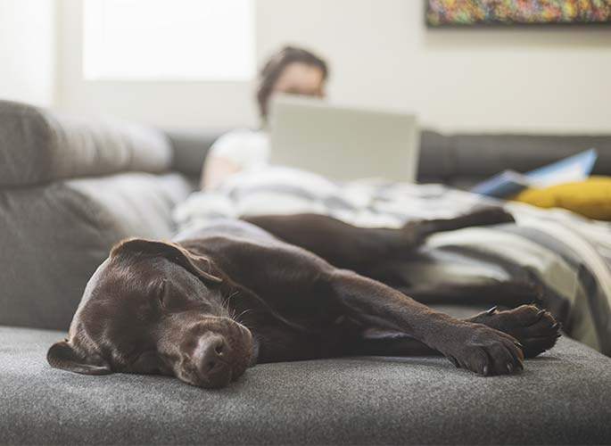 An image of a dog sleeping on a couch. Blurred in the background is a woman on her laptop. Both are peaceful.